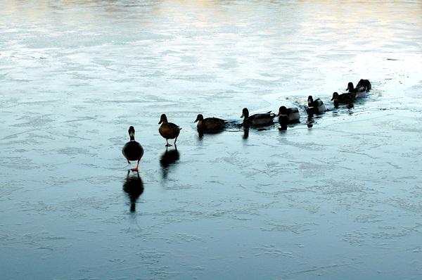 Leadership's Essence. (1/2)