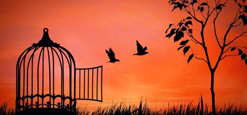 freedom_birdcage